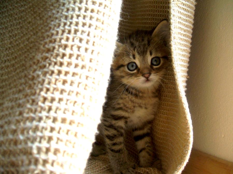 Kitty by Kiw-wi