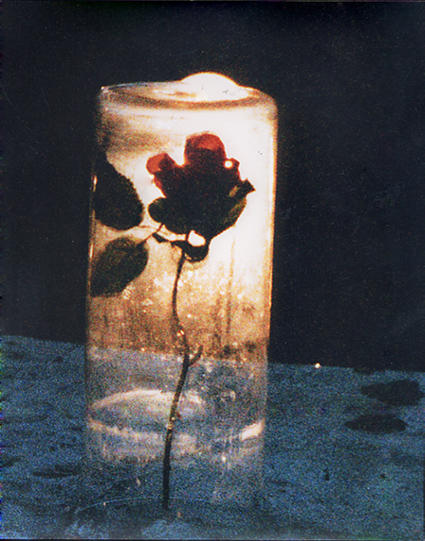 1000 images about beauty and the beast on pinterest for Rose under glass