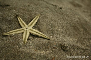 starfish by arTisTinDaMaKing