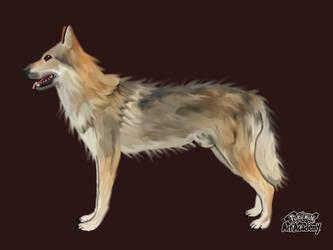 Czechoslovakian Wolfhound