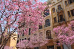 Cherry Blossom by rimah93