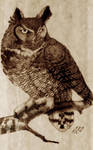 Great Horned Owl - Pyrography
