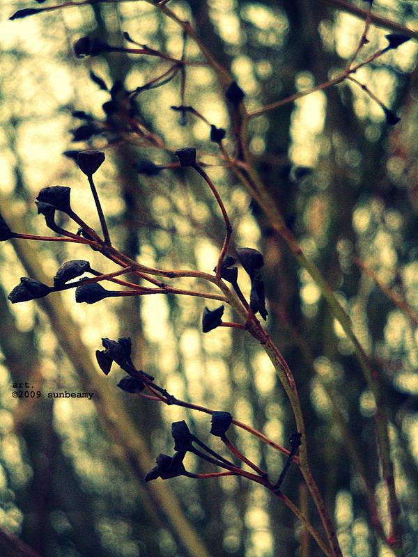 Flowers.Plants by sunbeamy