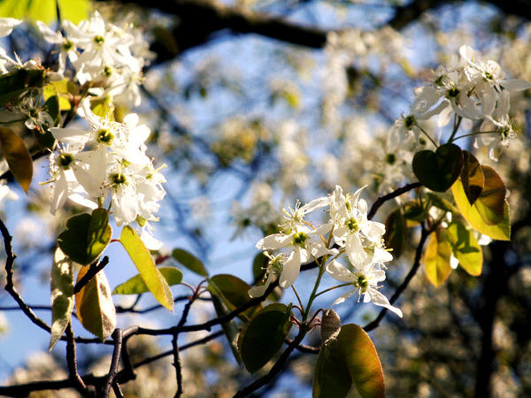 Spring. by sunbeamy