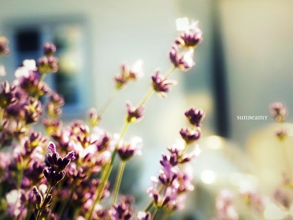 Purple Dreams. by sunbeamy