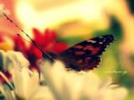a butterfly in love. by sunbeamy