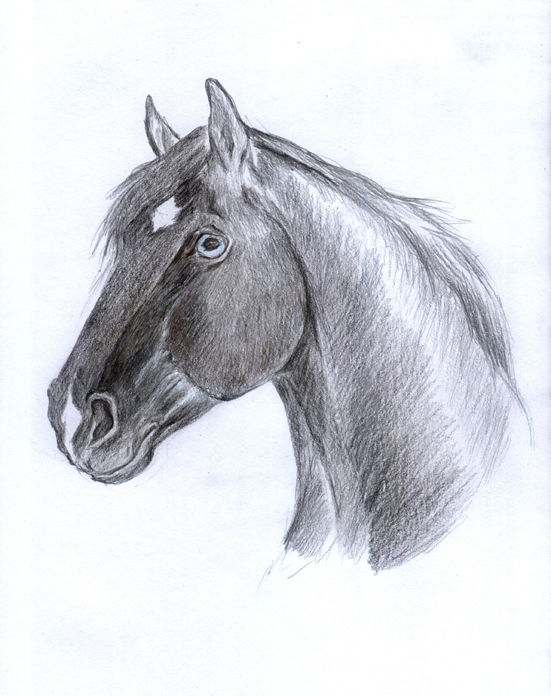 Horse21 by AlinaRettler