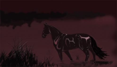 Black horse by AlinaRettler