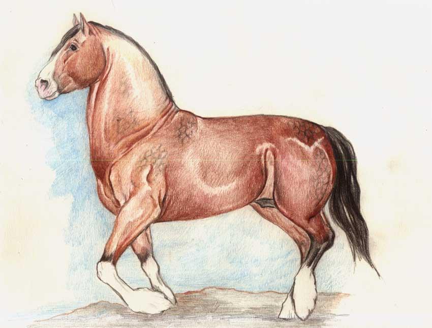 Shire Horse1 by AlinaRettler
