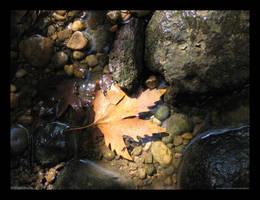 Rivery Golden Leaf by LightningIsMyName