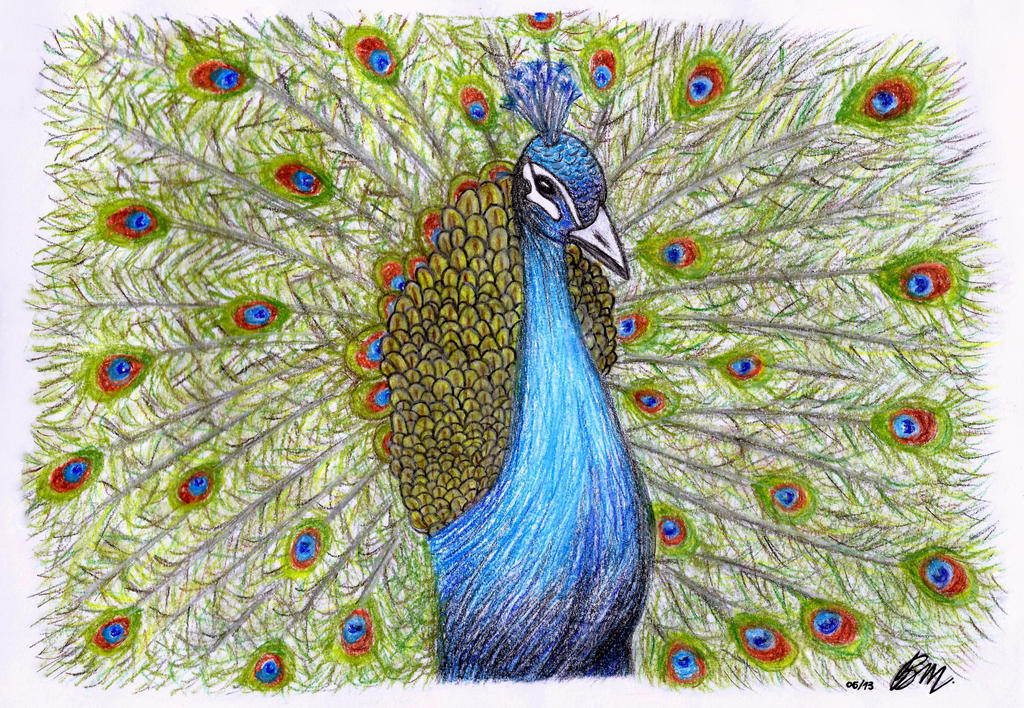 My pastel drawing peacock by barbarabm
