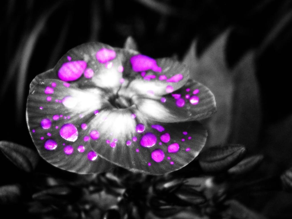 Razbijemo monotoniju bojom - Page 2 Violet_Rain_by_findingforever4