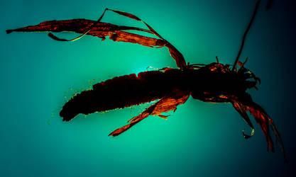Alien wasp by Vlodz