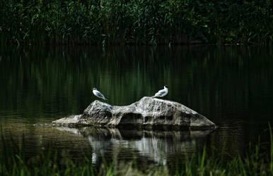 Gulls by Vlodz