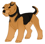 Day 1 - Airedale Terrier
