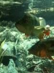Houston Aquarium fish 4