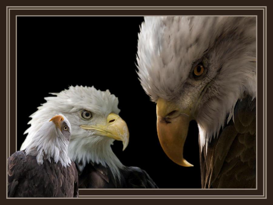 Eye's of a Eagle