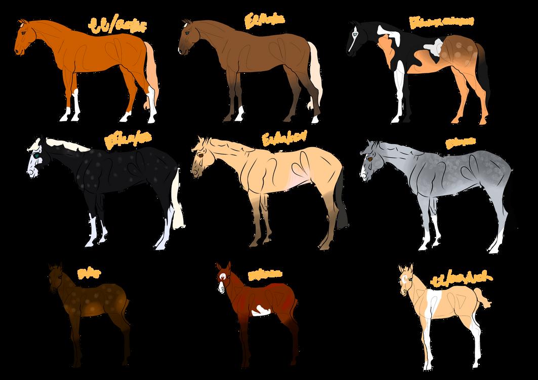 Horse adopts 5/9 open