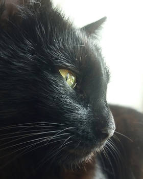 Black cat by ClaraNyx