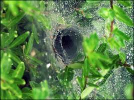Spinne by Zeitzeugin