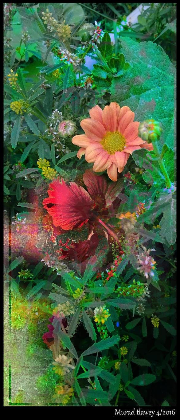 murad tlawey -floral by muradtlawey