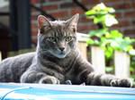 Cat Modeling