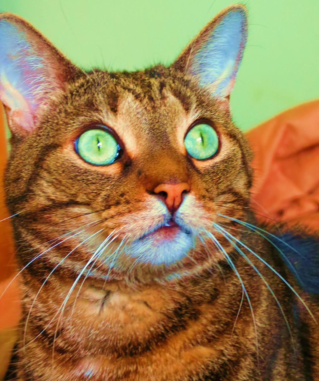 Ooo, I Think I See A Bird Outside! by Kitteh-Pawz