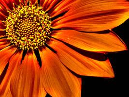 Orange Fire by Kitteh-Pawz