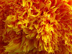 Shaggy Flower