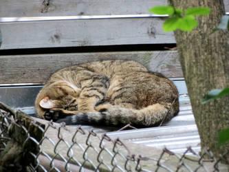 Cat Bun by Kitteh-Pawz