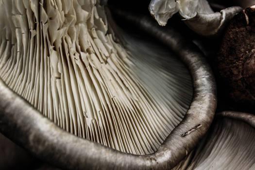 Mushroom Folds