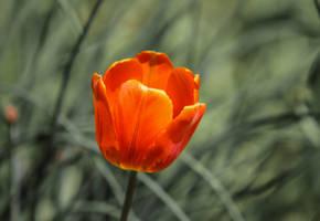Orange Warmth by Kitteh-Pawz