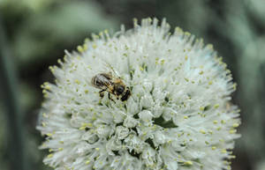 Hungry Honeybee by Kitteh-Pawz