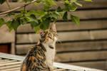 Posing Kitten