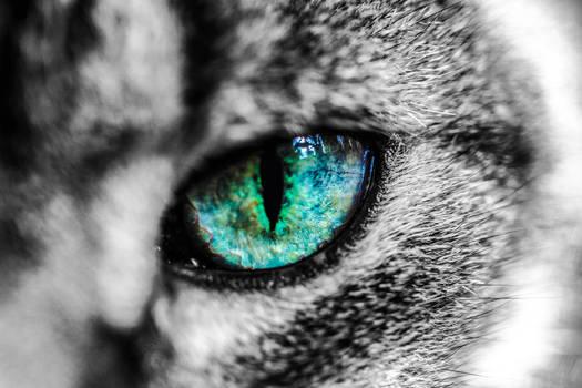 Cat Eye Reflection