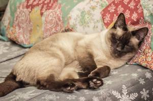 Sleeping Like a Human by Kitteh-Pawz