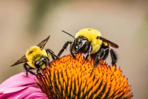Bee Date by Kitteh-Pawz