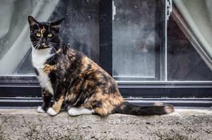 Urban Warrior Kitty by Kitteh-Pawz