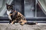 Urban Warrior Kitty