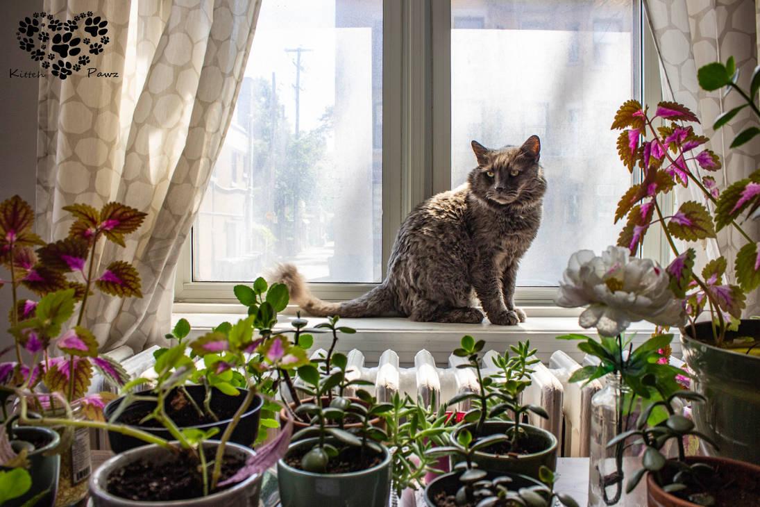 Guardian of the Indoor Garden by Kitteh-Pawz
