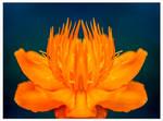 Symmetrical by Kitteh-Pawz