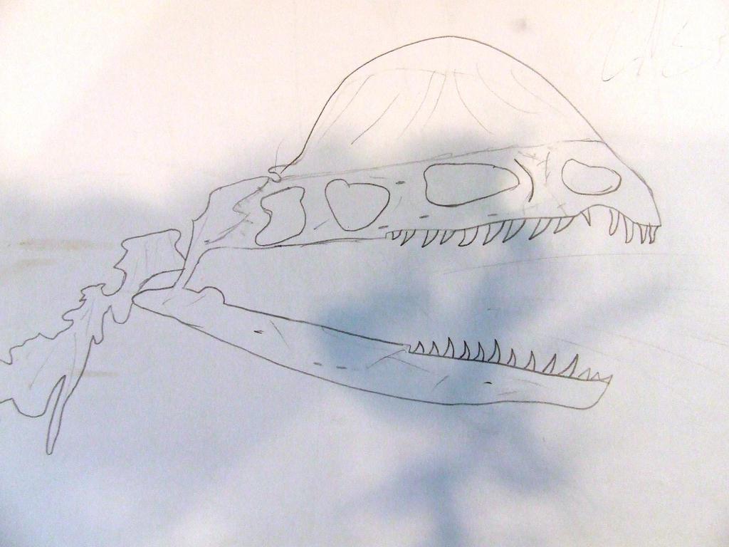 Dilophosaurus Skull by Skarlette8000