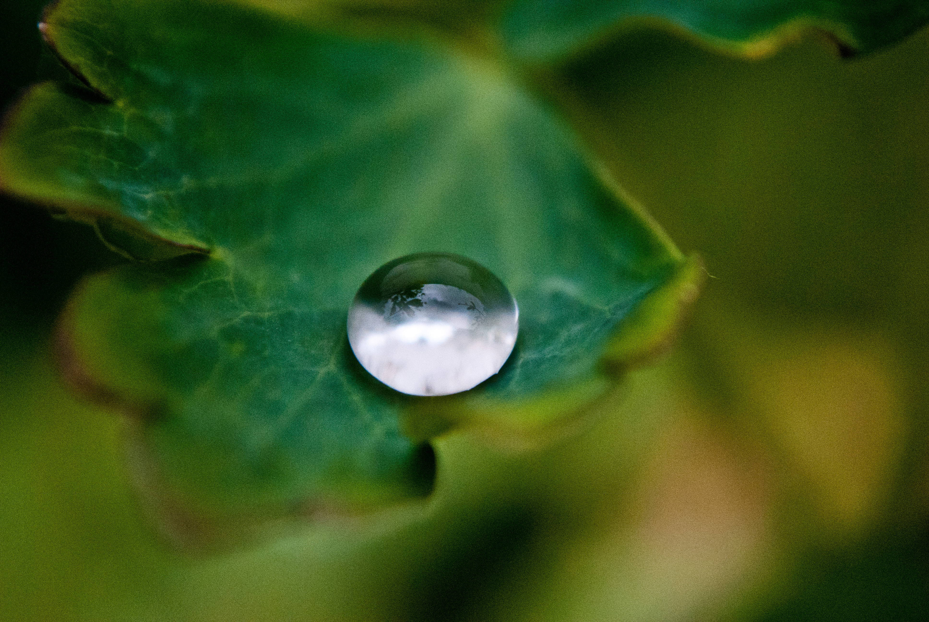 A lonely water drop by Louserz
