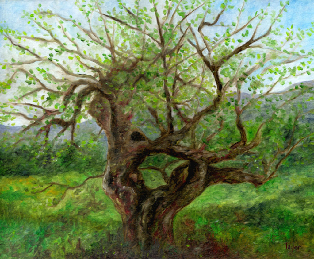 Old Apple Tree by ftmckinstry