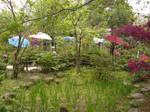 Chrysanthemums and Umbrellas