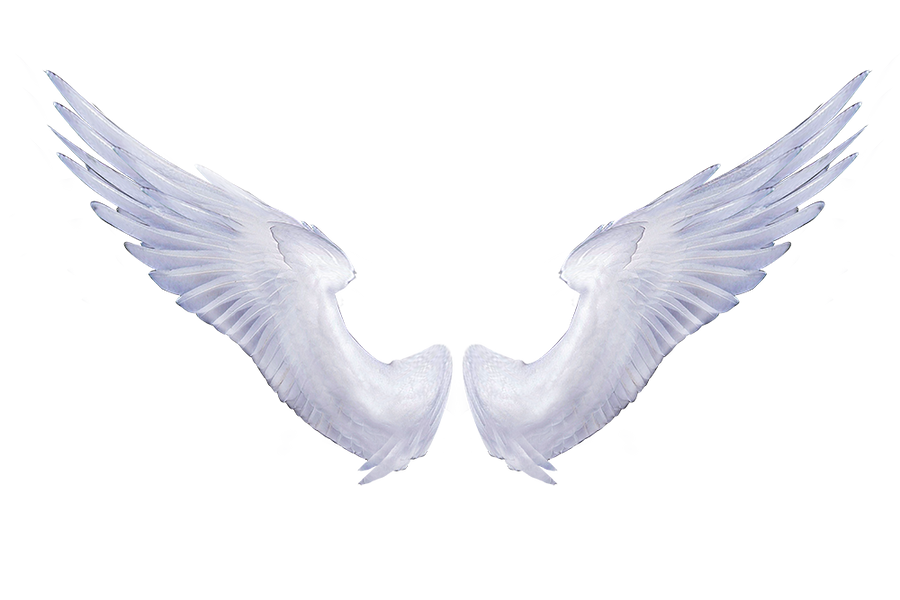 White Angel Wings 1 by
