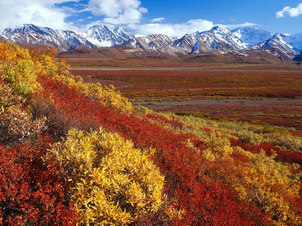 Alaska Denali Range by cywolf2083
