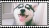 Husky Stamp #1 by TheSiberianHusky