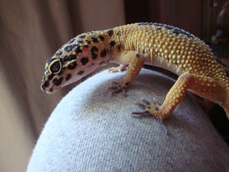 leopard geckos are cool by KarenTheDrawer
