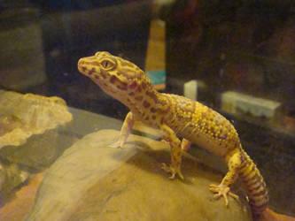 juju my gecko by KarenTheDrawer